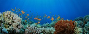 Stand Up For Marine Sanctuaries! Comment Period Now Open!!
